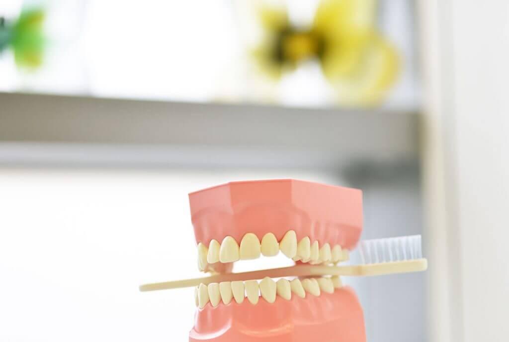 Gebiss mit Zahnbürste
